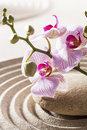 Beautiful symbol of zen femininity pink orchids in mineral garden for inner beauty and relaxation Stock Photography