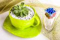 Beautiful table decorations on a net image of big green paper mache cup holding desert rose with white pebbles Royalty Free Stock Photography