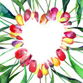 Beautiful tender bright heart of red yellow pink violet tulips watercolor hand sketch Royalty Free Stock Photo
