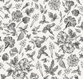 Seamless pattern. Realistic isolated flowers. Vintage background Petunia primavera hibisc Drawing engraving Vector Royalty Free Stock Photo