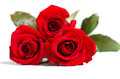Beautiful three red roses on white background Royalty Free Stock Image