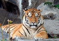 Beautiful Tiger portrait Stock Photos