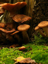 Beautiful toadstools Royalty Free Stock Images