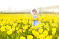 Beautiful toddler girl field of yellow daffodil flowers curly in a blue dress playing in a on a sunny summer evening Stock Images