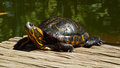 Beautiful tortoise relaxing on the sun botanical garden rio de janeiro Stock Photography