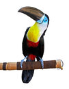 Beautiful toucan isolated on white Stock Images