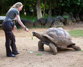 Beautiful tourist woman feeds a turtle young Royalty Free Stock Image