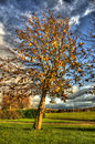 Beautiful Tree Blowing against the wind Royalty Free Stock Photos