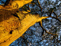 Beautiful tree in Kandy Botanical Garden Royalty Free Stock Photo