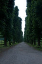 Beautiful tree-lined avenue with earth road Royalty Free Stock Photo