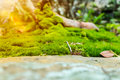 Beautiful tree with moss cover. Nature green wood sunshine backg