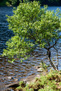 Beautiful tree near water view of a Stock Photo
