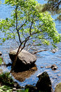 Beautiful tree near water view of a Royalty Free Stock Image