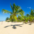 Beautiful tropical beach with coconut palm tree Stock Images