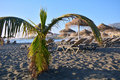 Beautiful tropical beach with palm tree. Tenerife.Canary Islands.Spain. Royalty Free Stock Photo