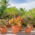 Beautiful tropical garden with flowers and plants potted Royalty Free Stock Photography