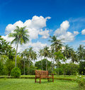 Beautiful tropical garden with palm trees and wooden park bench over cloudy blue sky Stock Photography
