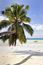 Beautiful  tropical island  beach Royalty Free Stock Images
