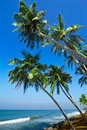 Beautiful tropical landscape ocean beach palm trees under blue sky Stock Images