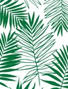 Beautiful Tropical Palm Tree Leaf Silhouette Background. Royalty Free Stock Photo