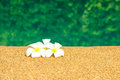 Beautiful tropical plumeria flowers on swimming pool with green garden reflection water closeup Stock Photography