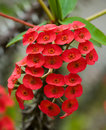 Beautiful tropical red flower. The unusual form. Flora.