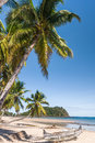 Beautiful tropical sandy beach seascape with palm trees Stock Photography