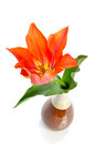 Beautiful tulip in a ceramic vase on white background Royalty Free Stock Image