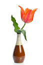 Beautiful tulip in a ceramic vase on white background Royalty Free Stock Photos