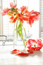 Beautiful tulips in old milk bottle Royalty Free Stock Image