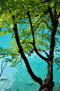Beautiful turquoise lake in Plitvice, Croatia Stock Images