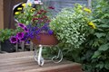 Beautiful variety of flowers in a pot that look Stock Images