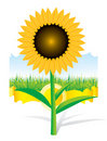 Beautiful vector sunflower background Royalty Free Stock Photography