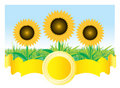 Beautiful vector sunflower background Royalty Free Stock Photo