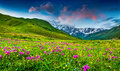Beautiful view of alpine meadows in the Caucasus mountains Royalty Free Stock Photo