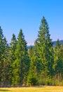 Beautiful view of Carpatian mountains. Royalty Free Stock Photo