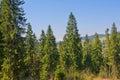 Beautiful view of carpatian mountains. Royalty Free Stock Image