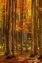 Beautiful View Of A Forest Wit...