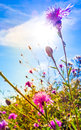 Beautiful view in summer flower forest of flowers Royalty Free Stock Photos
