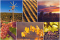 Beautiful vineyard a collage of Royalty Free Stock Images