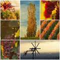 Beautiful vineyard a collage of Royalty Free Stock Photography