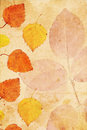 Beautiful vintage background with autumnal leaves Royalty Free Stock Image