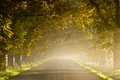 Beautiful vivid autumn scene with misty road through the alley Stock Photo