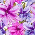 Beautiful vivid purple and pink amaryllis flowers on white background. Seamless spring pattern. Watercolor painting.