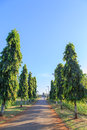 Beautiful walking way garden Royalty Free Stock Photo