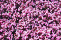 Beautiful wall made of red violet purple flowers, roses, tulips, press-wall,