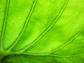 Beautiful water drop on a leaf close-up Royalty Free Stock Photo