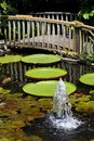 Beautiful Water Lily Garden with Bridge Royalty Free Stock Photography