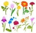 Beautiful watercolor flower set handmade style illustration isolated on white