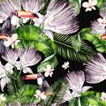 Beautiful watercolor seamless, tropical pattern background with palm leaves, flower of roses, capers and  bird tukan. Royalty Free Stock Photo